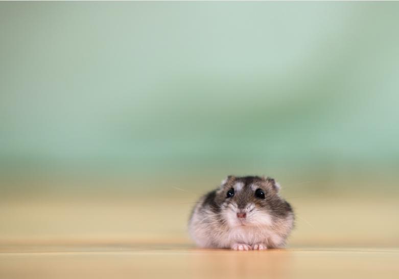 Why Is My Hamster's Poop Green?