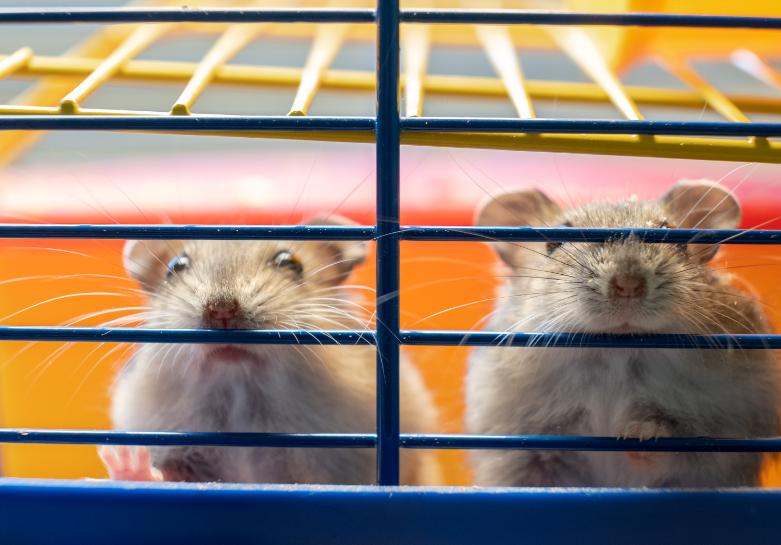 Hamster Bites