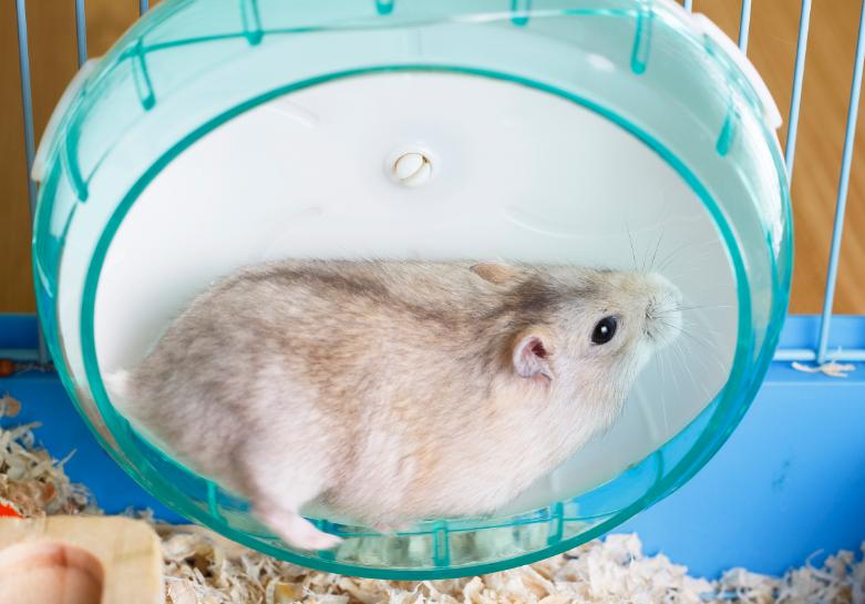How Long Do Hamsters Run on Their Wheel