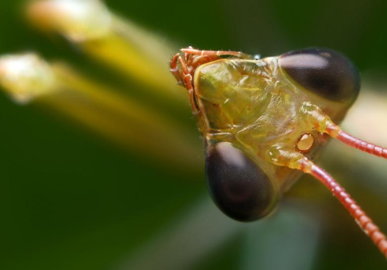 Are Praying Mantis Poisonous