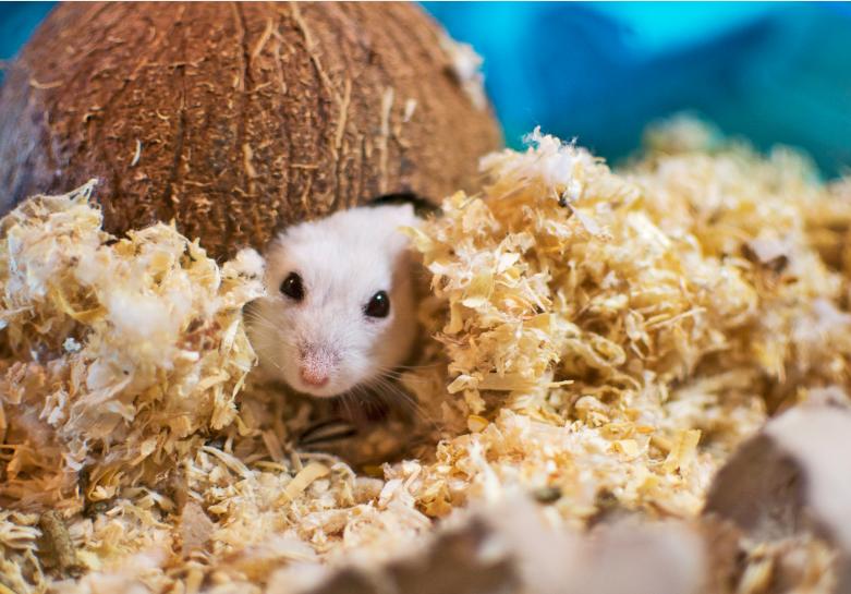 When Do Baby Hamsters Get Fur