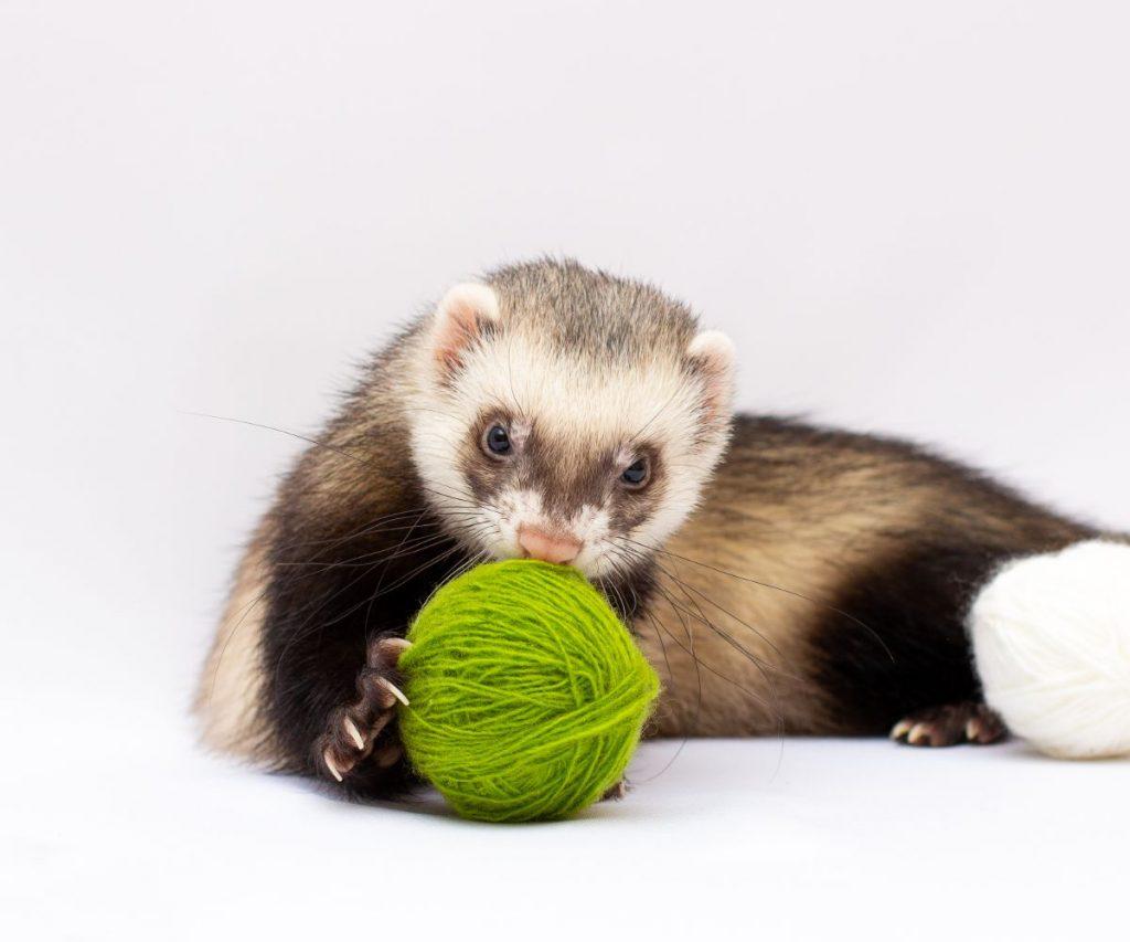 Increase Stimmulus to fight depression in ferrets