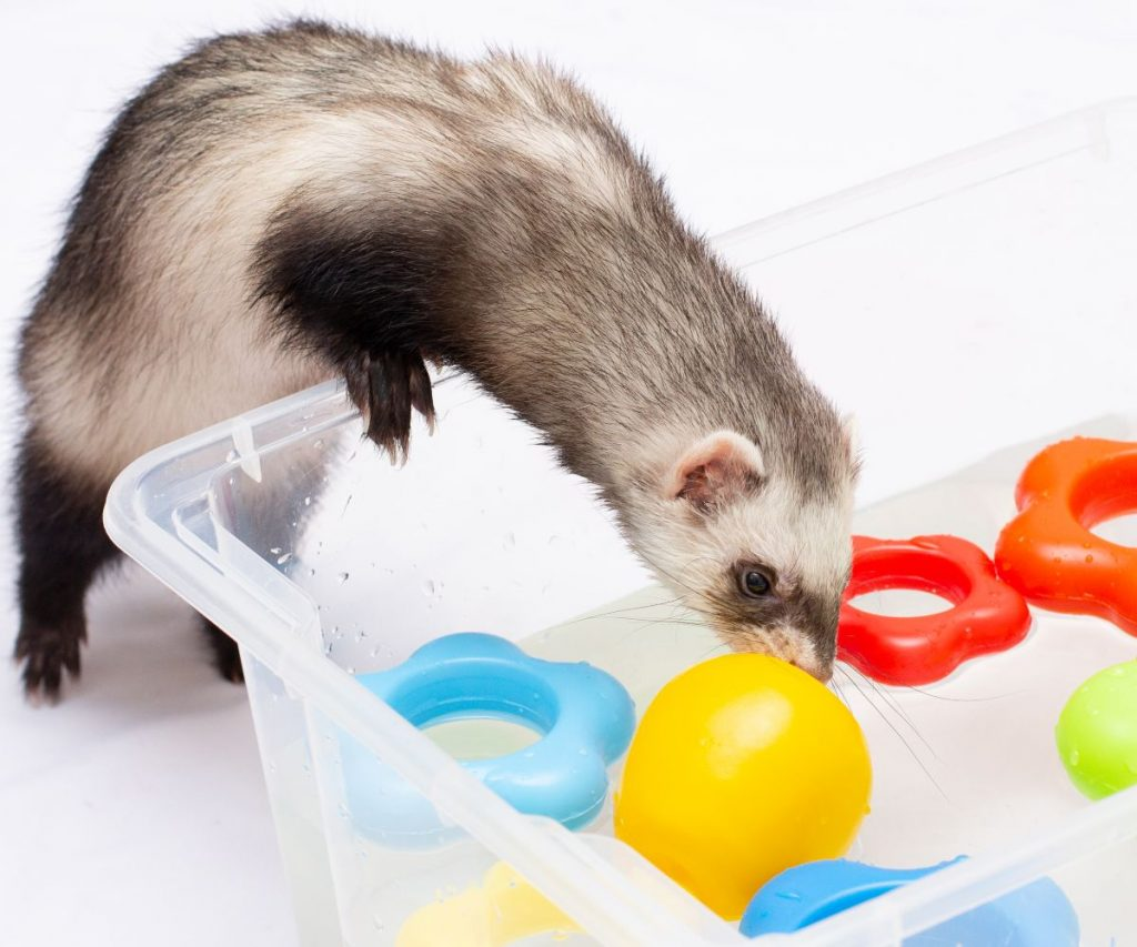 Is Baby Shampoo Safe for Ferrets?
