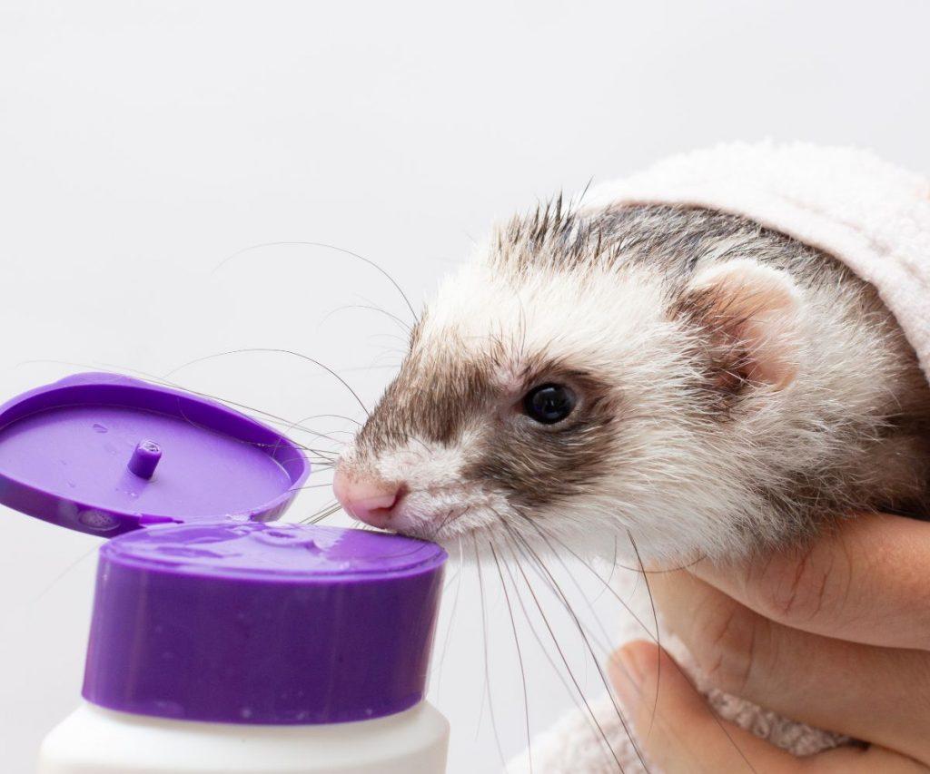 Baby Shampoo for Ferrets